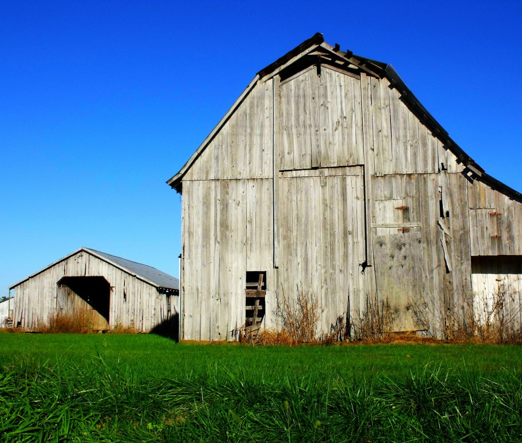 What Is Farming? My Farm Education