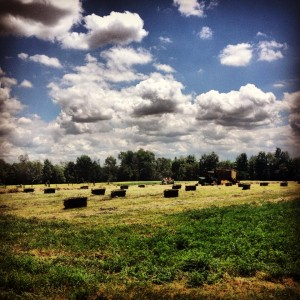 starting a hay farm